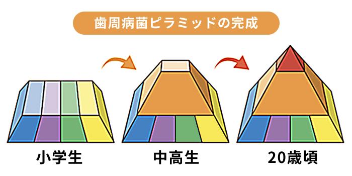 歯周病菌ピラミッド